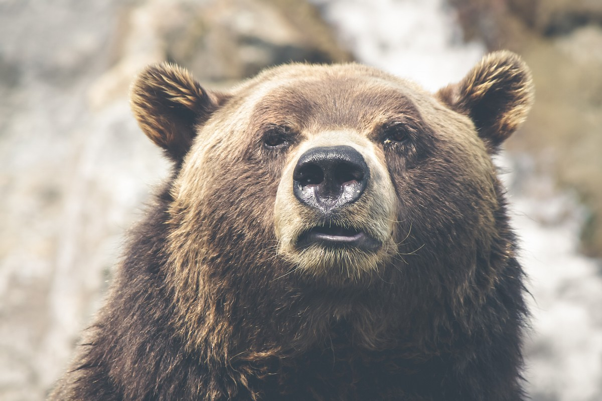 Bull vs Bear Market Definitions & Strategy | Rule #1 Investing