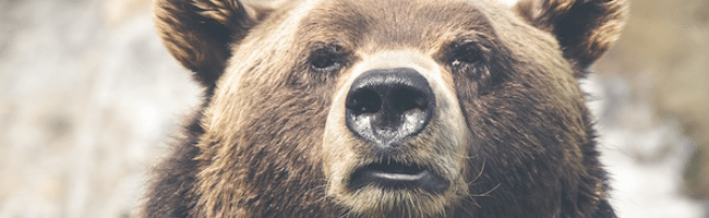 What's the Difference Between a Bull and Bear Market?